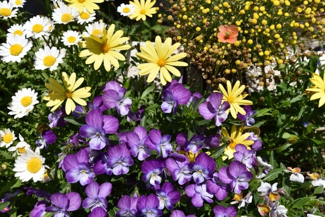 季節の花寄せ植え
